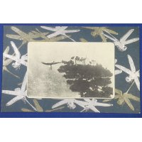 1900's Japanese Postcard : Art of Dragonflies & Photo of Cranes on Pine Tree (= good luck charms in Japan)