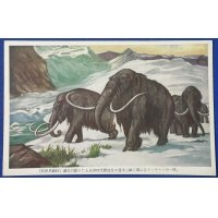 "1930's Japanese Postcards : Dinosaurs Art "" Extinct Animals "" mammoths"